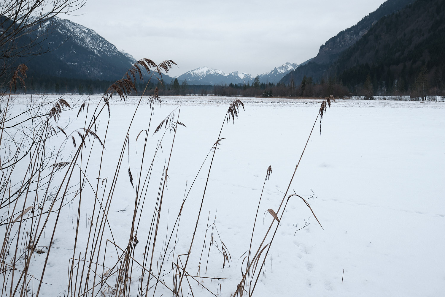 Graswangtal, Oberammergau, Bavaria, view towards the west accross the wetlands of the sources of the river Ammer in an overcast day of January