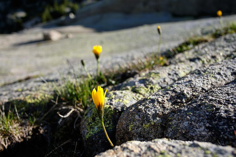 Six-days hike around the Parc Nacional d'Aiguetortes i Estany de Sant Maurici in the central Pyrenees.