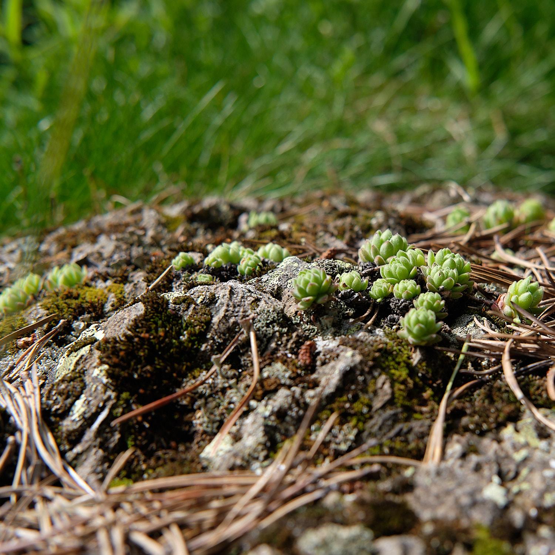 Nature close ups on a walk around Estany de Sant Maurici, Pyrenees, Cataluña, Spain