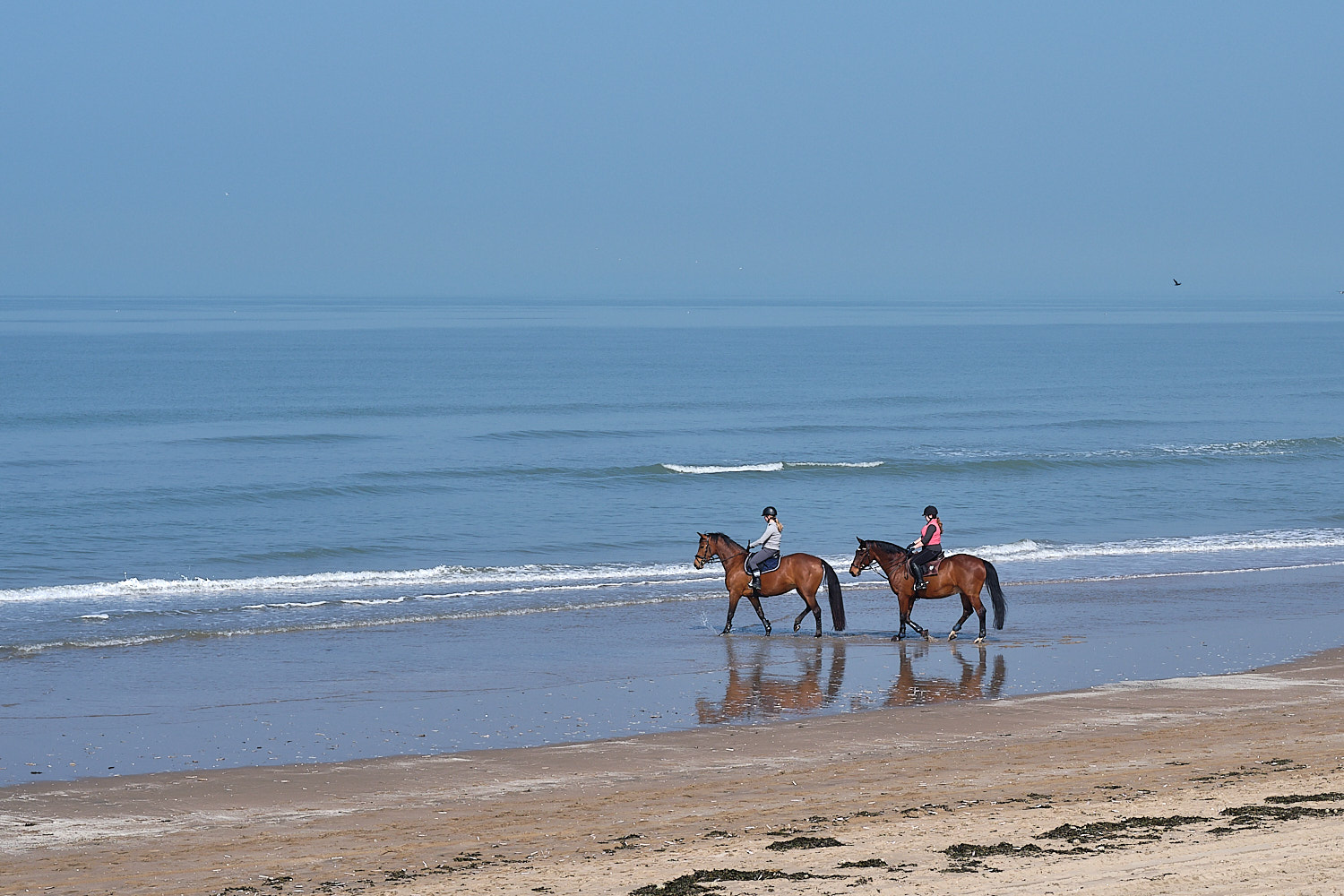 Two riders in horses at the beach shore in Noordwijk, Holland, The Netherlands