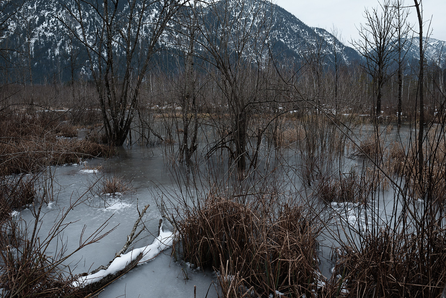 Graswangtal, Oberammergau, Bavaria, view towards the west accross the frozen wetlands of the sources of the river Ammer in an overcast day of January