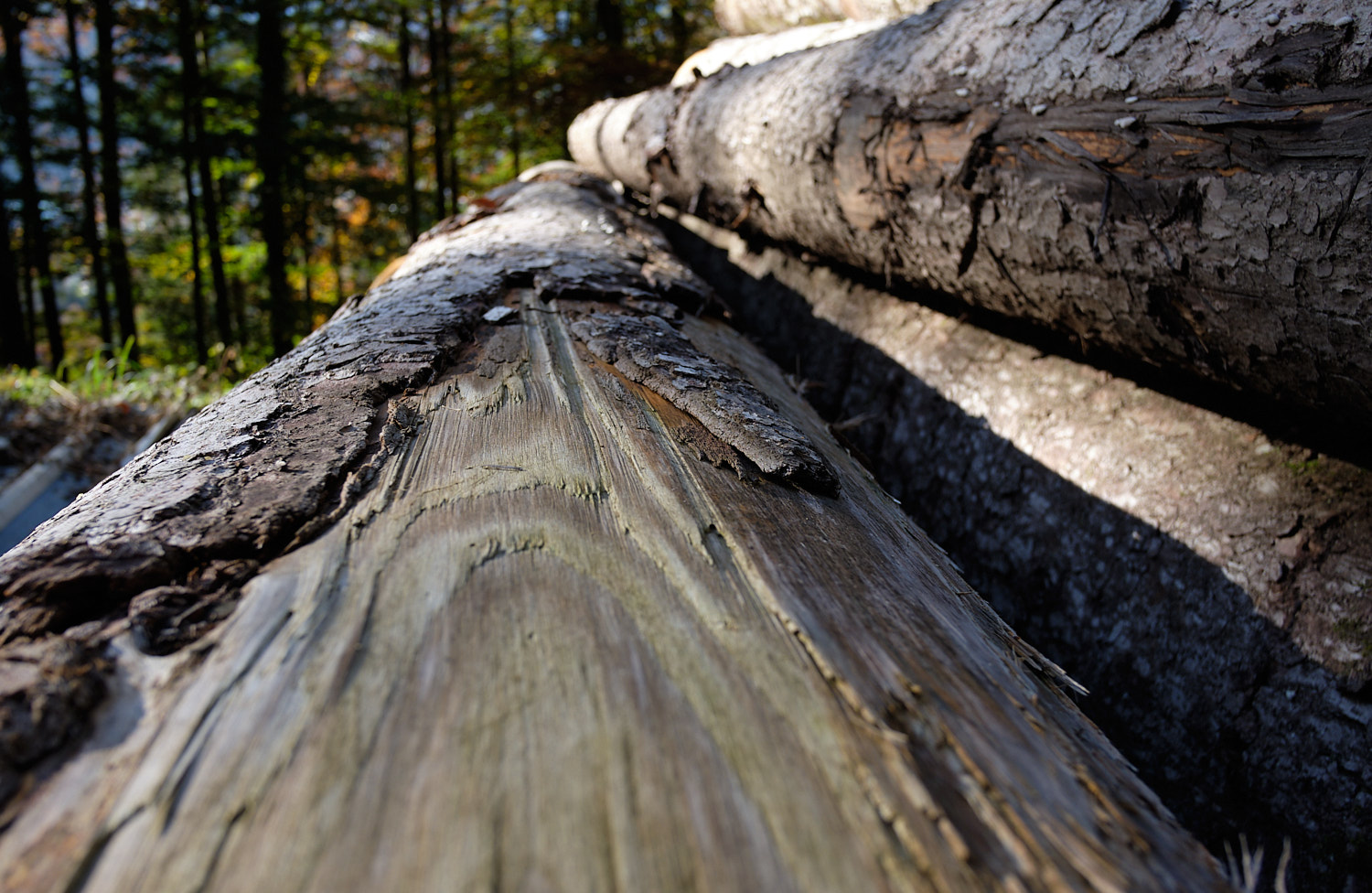 Close up of logs on the way to the Kneifelspitze