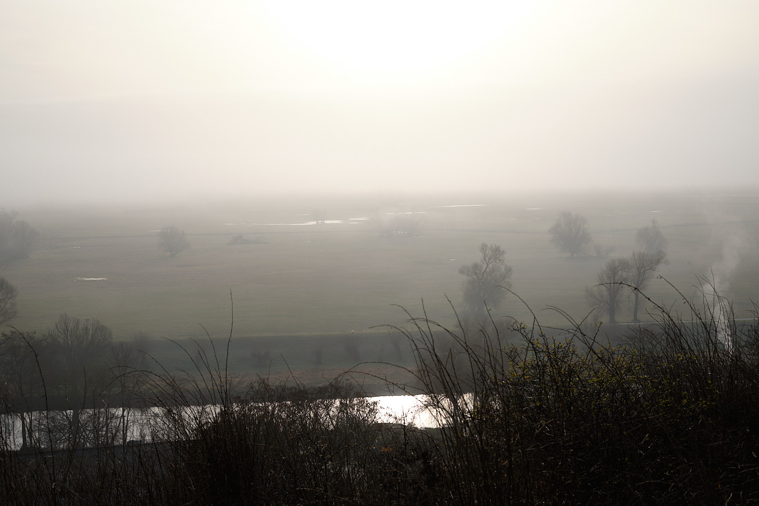 Winter equinox dimmed light under the fog at the banks of the Oder.