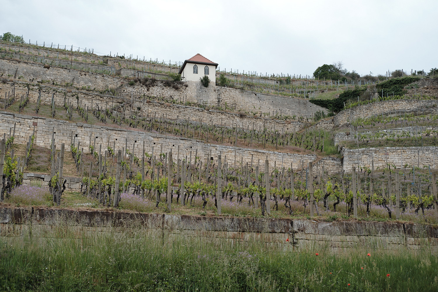 Freyburg, upmost north laying old wine gardens in Germany