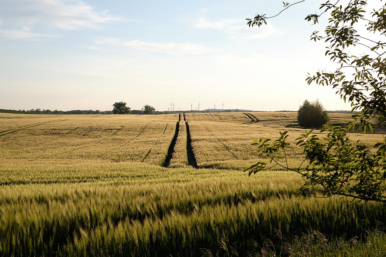 Fields in Brandenburg